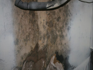 Home microbial mold abatement Neo Corporation