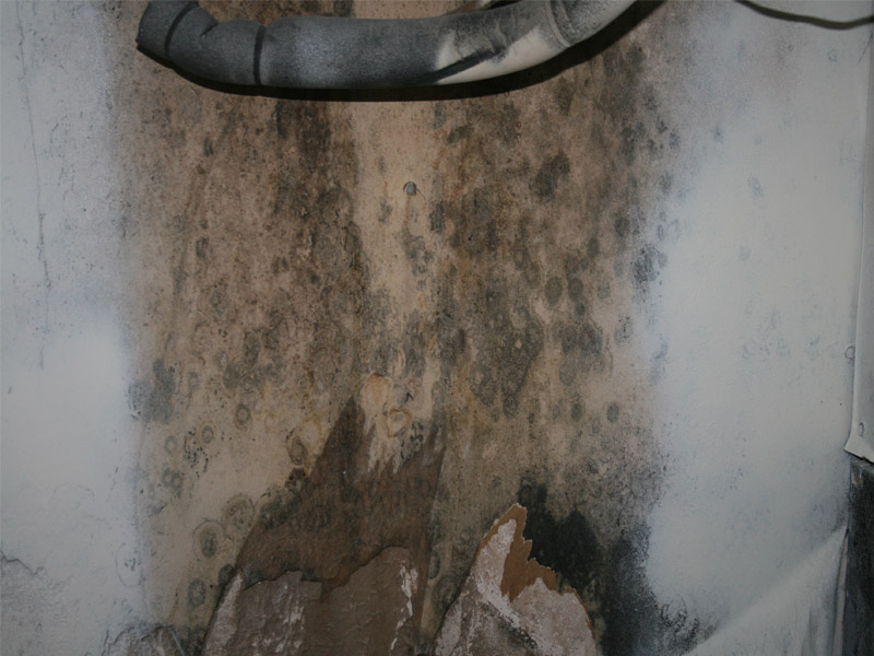 """Microbial """"Mold"""" Abatement mold Neo Corporation"""